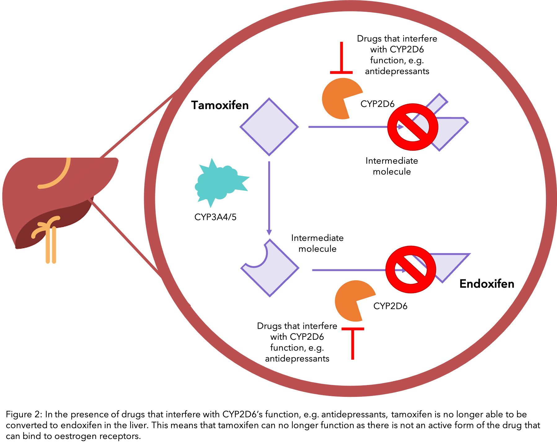 A figure showing how drugs can interfere with how tamoxifen works
