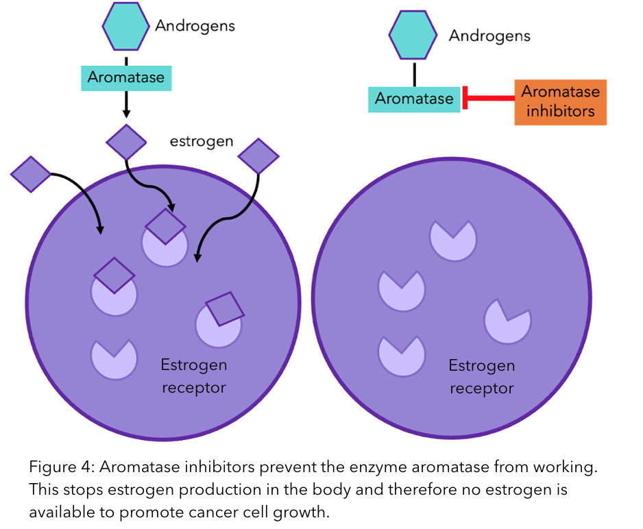 A figure to show how aromatase inhibitors prevent the enzyme aromatase from working